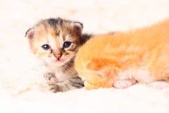 Little cute kitten Stock Image