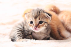 Little cute kitten Royalty Free Stock Images