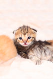 Little cute kitten Stock Image