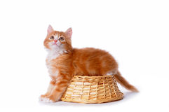 Little cute kitten sit on the basket Royalty Free Stock Photos