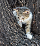Little cute kitten try to climb down from tree Royalty Free Stock Photography