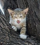 Little cute kitten try to climb down from tree. Little cute gray kitten try to climb down from outdoor tree with exciting feeling, selective focus on its eye Stock Image