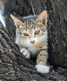 Little cute kitten try to climb down from tree. Little cute gray kitten try to climb down from outdoor tree with exciting feeling, selective focus on its eye Stock Photos
