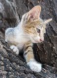 Little cute kitten try to climb down from tree. Little cute gray kitten try to climb down from outdoor tree with exciting feeling, selective focus on its eye Stock Photo