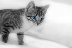 LIttle cute kitten on white Stock Photos