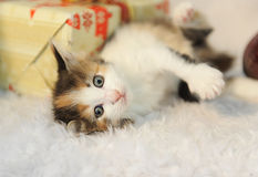 Little cute kitty lies in the interior of the New Year on a white furry rug Stock Photo