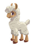 Little cute lama Stock Image