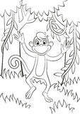 Little cute monkey is jumping or running. Stock Photos