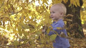 Little cute one year old baby is played near the tree in the autumn park. Standing on fallen yellow leaves and smiling stock footage