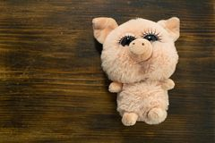 Little cute pig on wooden background. Closeup cute soft toy pig. Symbol of Chinese New Year. Children`s Pig Toy. Little cute pig on wooden background. Closeup royalty free stock photography