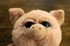 Little cute pig on wooden background. Closeup cute soft toy pig. Symbol of Chinese New Year. Children`s Pig Toy. Little cute pig on wooden background. Closeup royalty free stock images