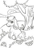 Little cute pony seating on the field. Coloring pages. Little cute pony seating on the field near the tree Royalty Free Stock Photo