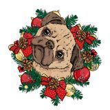 A little cute pug in a Christmas wreath with balls and bows. Vector illustration for a postcard or a poster. New Year`s. vector illustration