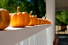 Little cute pumpkins in a row Stock Photography