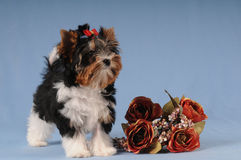 Little cute puppy with bunch of roses Royalty Free Stock Photo
