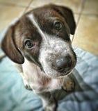 Little cute puppy dog Stock Photo