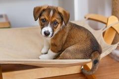 Free Little Cute Puppy In A Hammock Stock Photo - 125431570