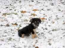 Little cute puppy Stock Photos