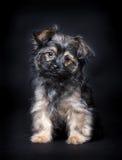 Little cute puppy. (6 months oud Stock Photo