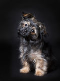 Little cute puppy. (6 months oud Royalty Free Stock Image