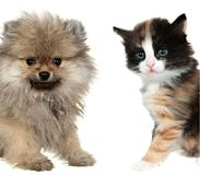 Little cute puppy and red mixed-breed kitten Royalty Free Stock Images