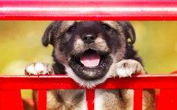 Little cute puppy sitting in the grocery cart and funny Peeps stock image