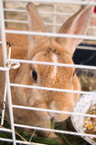 Little cute rabbit Royalty Free Stock Photography