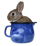 Little cute rabbit in a blue cup Stock Images
