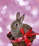 Little cute rabbit Royalty Free Stock Photo