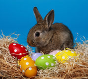 Little cute rabbit and easter eggs Stock Images