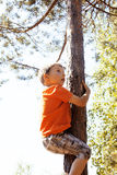 Little cute real boy climbing on tree hight, outdoor lifestyle c Stock Image