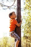 Little cute real boy climbing on tree hight, outdoor lifestyle c Stock Images