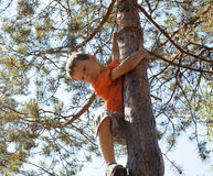 Little cute real boy climbing on tree hight, outdoor lifestyle concept Royalty Free Stock Images