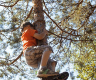 Little cute real boy climbing on tree hight, outdoor lifestyle concept Stock Photo