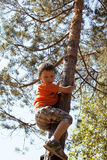 Little cute real boy climbing on tree hight, outdoor lifestyle concept Stock Photos