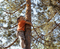 Little cute real boy climbing on tree hight, outdoor lifestyle concept Stock Photography