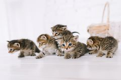 Little cute striped kittens. Striped kittens sit near the basket stock photos