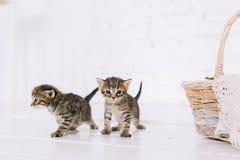Little cute striped kittens stock photos