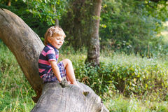 Little cute toddler boy having fun on tree in  forest Royalty Free Stock Images