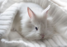 Little cute white rabbit Stock Photos
