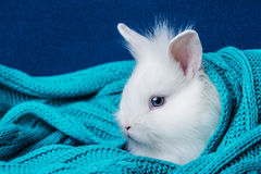 Little cute white rabbit in a soft scarf Stock Photos