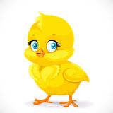 Little cute yellow cartoon chick Royalty Free Stock Photography