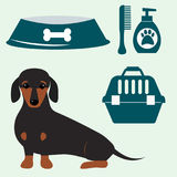 Little dachshund puppy cute brown purebred mammal sweet dog young pedigreed animal breed vector illustration Royalty Free Stock Photo
