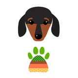 Little dachshund puppy head purebred mammal sweet dog young pedigreed animal breed vector illustration Royalty Free Stock Photos