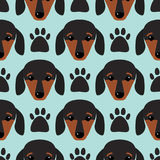 Little dachshund puppy head seamless pattern dog young pedigreed animal breed vector illustration Royalty Free Stock Photos