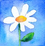Little Daisy. Watercolor painting, created and painted by the photographer Stock Photo