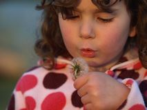 Little dandelion blower. Royalty Free Stock Image