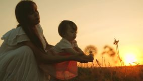 Little daughter and mother play in park at sunset. baby stretches his hands to a dandelion. happy family travels on the. Summer meadow. teamwork mother and stock video footage
