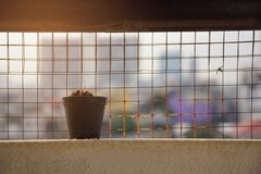Little dead cactus pot on balcony with blur city background. Copy space stock photos
