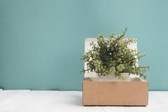 Little decoration tree growing in package brown cardboard box or tray on bright white wooden table with blue wall background. copy royalty free stock photography